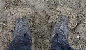 Mud, Mud glorious mud
